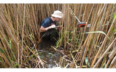Ongoing monitoring of wetland vegetation