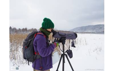 The project's target species in the midwinter counts of waterbirds