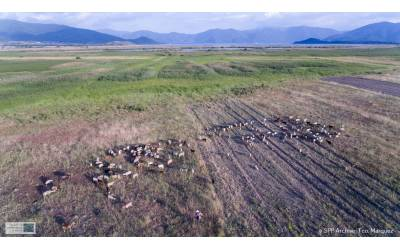Collective decisions on the management of Prespa's wetlands